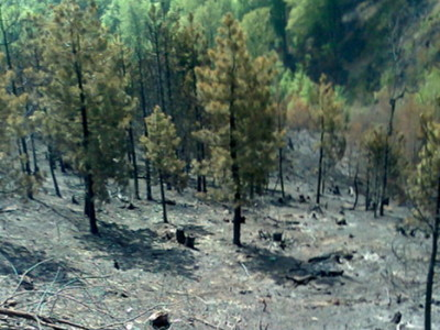 Nije dozvoljene loženje vatre u šumama