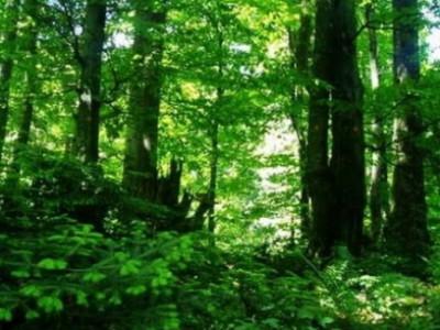 Pokret Otpor uz Dan zaštite okoliša