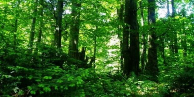 Značaj važnosti šuma
