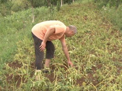 Vlada ZDK: Podrška poljoprivrednoj proizvodnji