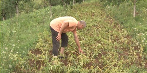 Dorađeno Uputstvo o korištenju sredstava za unapređenje poljoprivrede