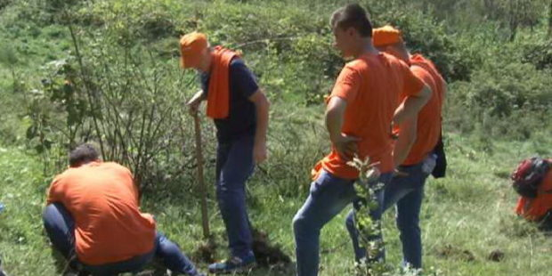Nove sadnice bora na Zmajevcu