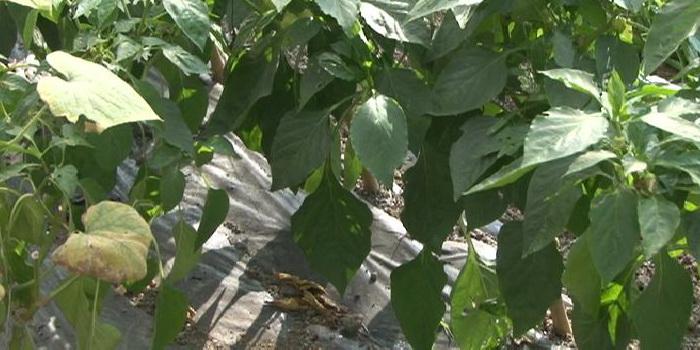 Odluke Vlade ZDK iz resora poljoprivrede