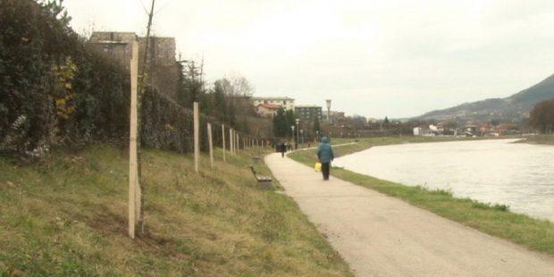 Novi drvored jasena uz rijeku Bosnu
