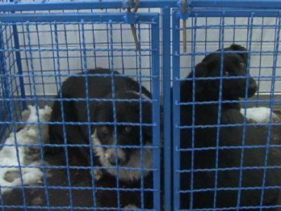 Kapacitet azila za napuštene pse skoro iskorišten