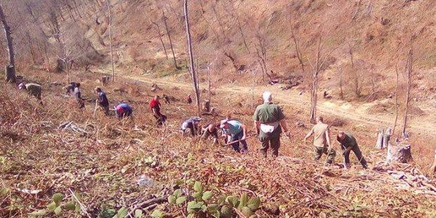 Na padinama Čolana zasađeno 6 hiljada sadnica
