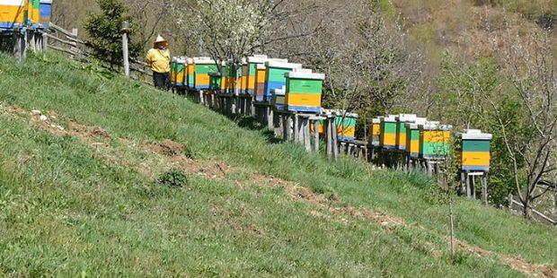 Neophodno preventivno djelovanje na zaštiti pčela