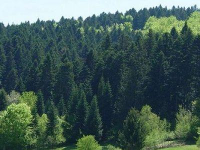 Usvojena informacija o gospodarenju šumama