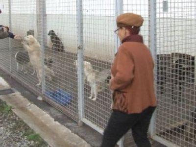 Alba organizovala posjetu Azilu za napuštene životinje