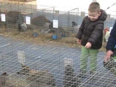 Sinoć na Kamberovića polju otvorena Izložba sitnih životinja