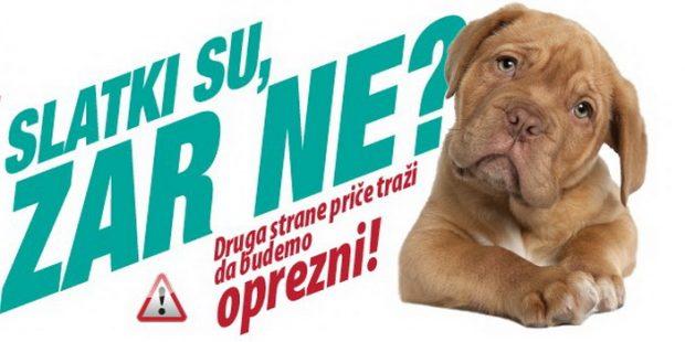 IZH: Besplatna dijagnostika bolesti pasa